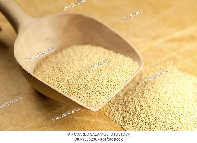Amaranth Seeds on a Wooden Spoon