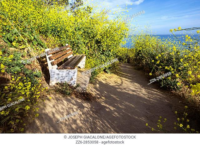 Public bench with wildflowers on a coastal walking path photographed on a Spring morning. La Jolla, California, USA
