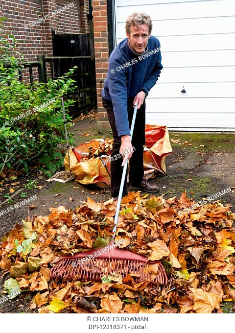 Man rakes autumn leaves in to a pile on his driveway; Exeter, England
