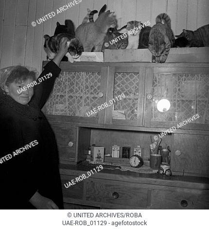 Eine Bäuerin kümmert sich liebevoll um ihre neun Katzen, Norddeutschland 1954. A farmer's wife taking care for nine cats, Northern Germany 1954