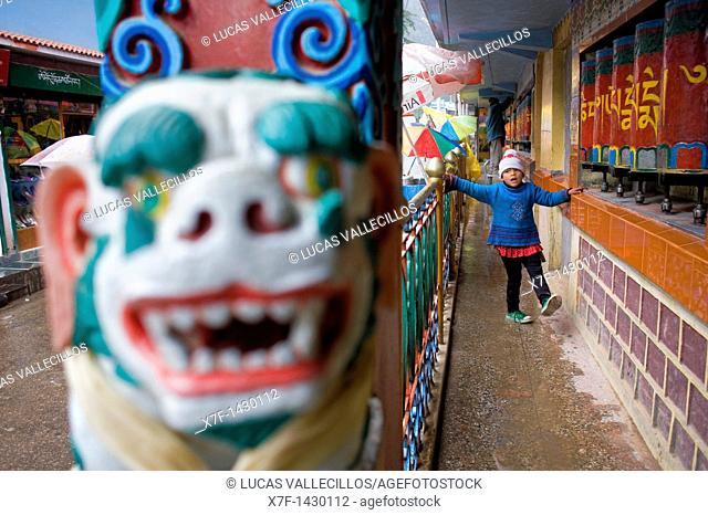 girl and Prayer Wheels, in Main Bazar street,McLeod Ganj, Dharamsala, Himachal Pradesh state, India, Asia