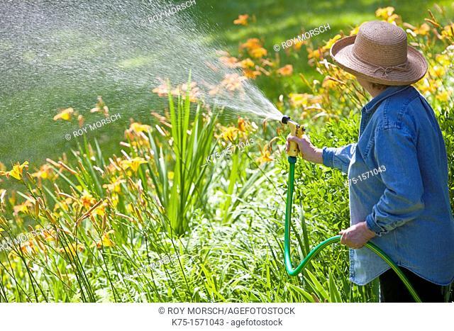 Woman watering lilies in garden