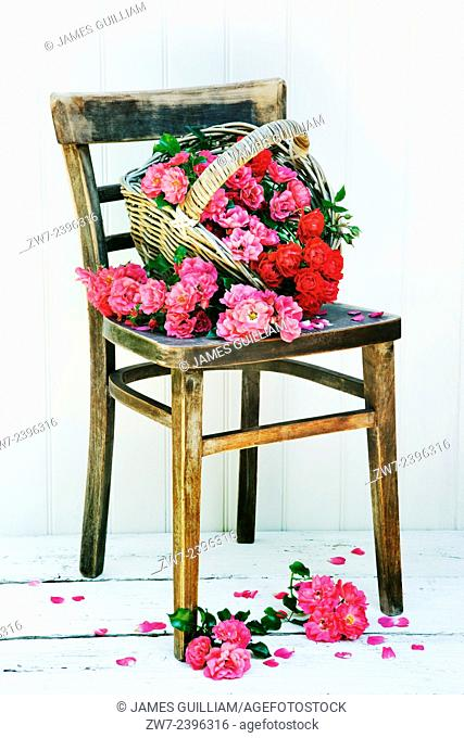 Baket with Roses on old wooden chair