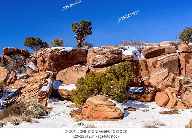 Light snow and junipers on the rocks, Dead Horse Point State Park, Utah, USA