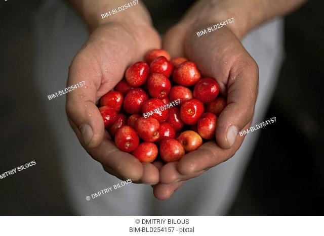 Hands of woman holding cherries