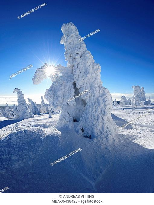 Germany, Saxony-Anhalt, Harz National Park, winter on the Brocken (mountain), the sun shines through deeply snow-covered spruces, over the clouds