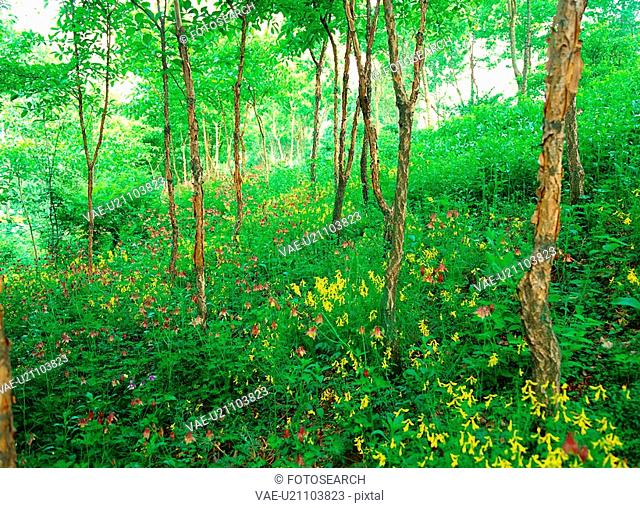 tree, nature, plant, forest, scenery, film