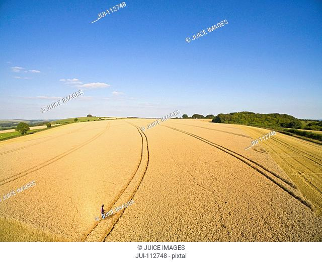 Aerial view of farmer standing in sunny golden barley field