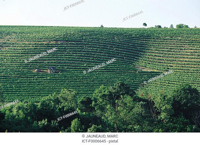 fda8078dd4 Vineyard of the coteaux du layon Stock Photos and Images   age fotostock