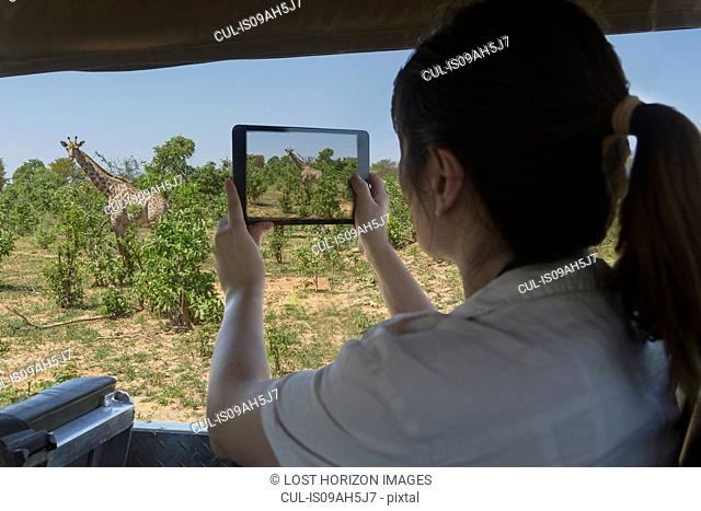 Woman using digital tablet to photograph giraffe from safari truck, Kasane, Chobe National Park, Botswana, Africa