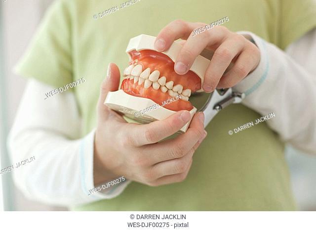 Germany, Bavaria, Landsberg, Child holding model of teeth