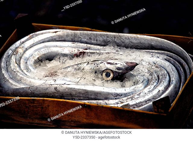 Eel in wooden box ready for sale, fish market in Catania, Catania, Sicily, Italy