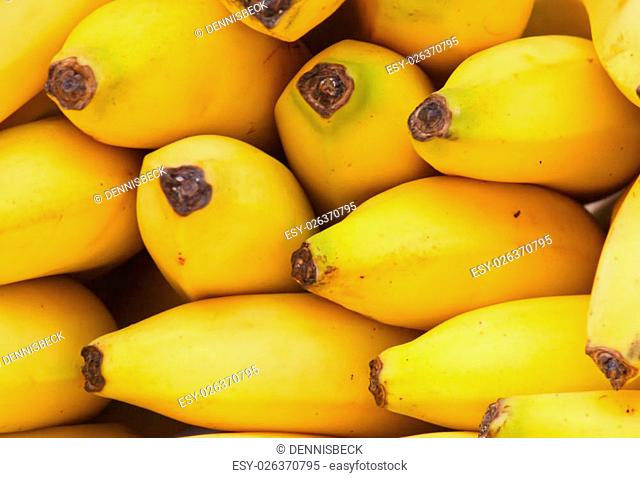 Bunch of Fresh Bananas at a Street Market
