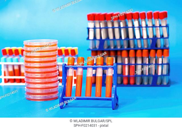 Biological samples in a lab