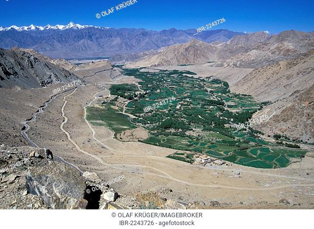 View of fields, Leh, Ladakh, Indian Himalayas, Jammu and Kashmir, North India, India, Asia
