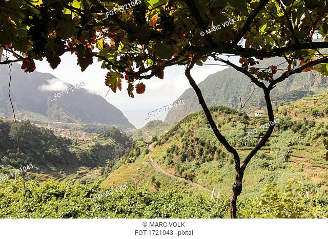 Idyllic view of green landscape and mountains, Sao Vicente, Madeira, Portugal