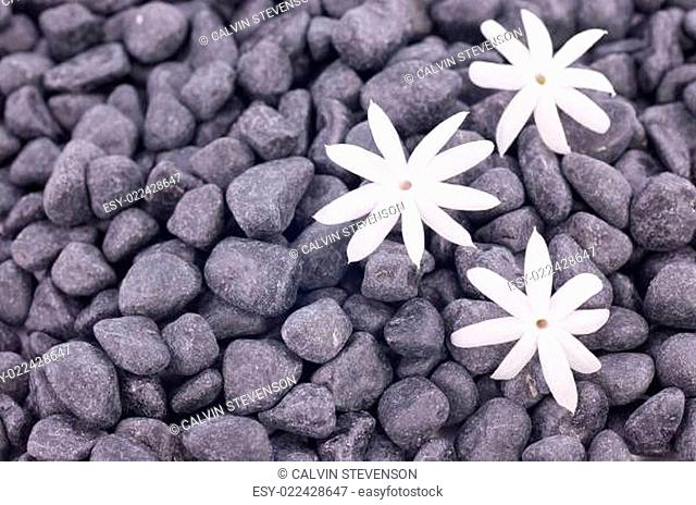 White jasmine flowers over zen stones background