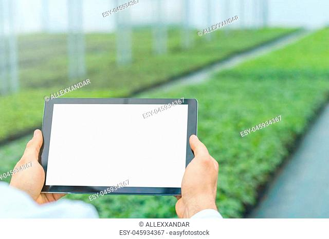 Plant seedlings growing greenhouse spring. Biotechnology engineer hands with tablet
