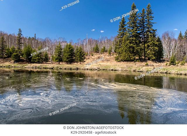Junction Creek in early spring with swirls of foam and floating pollen, Greater Sudbury, Ontario, Canada