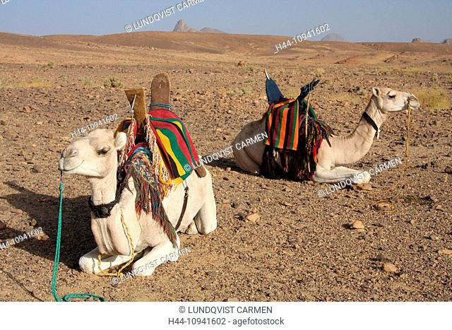 Algeria, Africa, north Africa, desert, stone desert, rocky desert, gibber plain, Sahara, Tamanrasset, Hoggar, Ahaggar, mountain, mountains, Tuareg, ride, camel