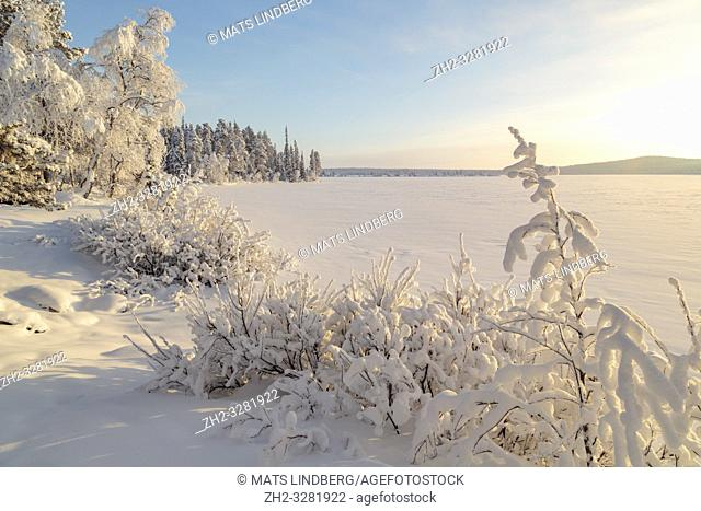Landscape in winter season, nice warm afternoon light, snowy trees, mountain in background, Gällivare county, Swedish Lapland, Sweden