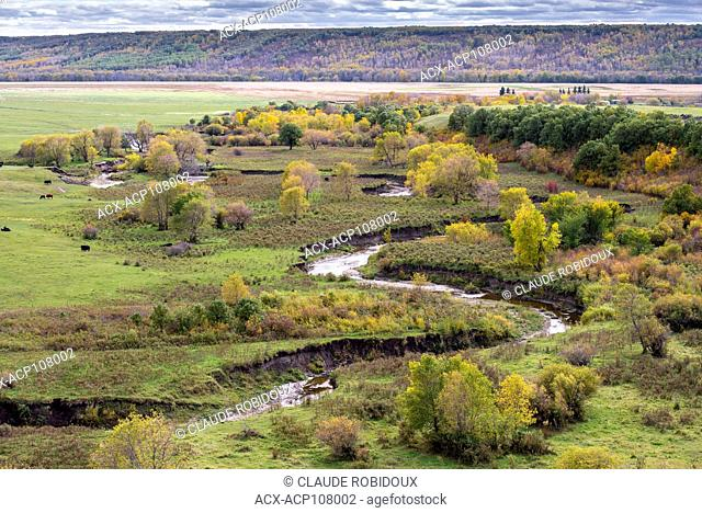 Cows and colourful trees in the fall in the Qu'appelle River Valley in Saskatchewan, Canada