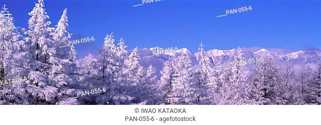 Frost on Trees, Northern Alps, Matsumoto, Nagano, Japan