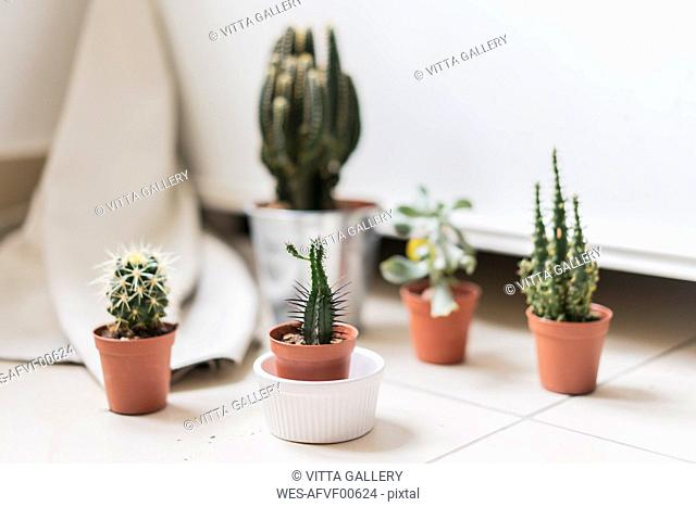 Potted succulent and cactus