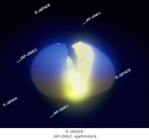 Light coming from egg