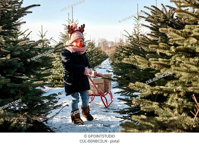 Girl in christmas tree forest pulling presents on toboggan, portrait