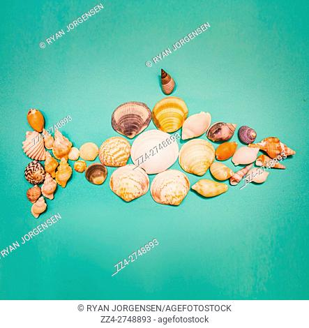 Nautical or marine concept with a seashell fish formed of a holiday collection of assorted shells from a tropical beach