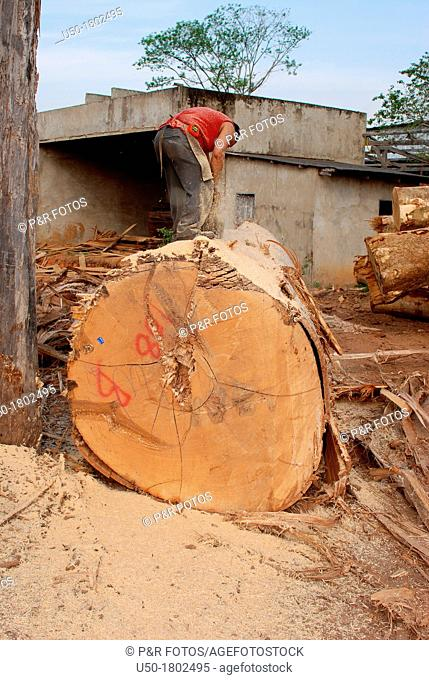 Worker riving wood log of Ceiba sp   Bombacaceae, Angiospermae  in legal sawmill, Rio Branco, Acre, 2011