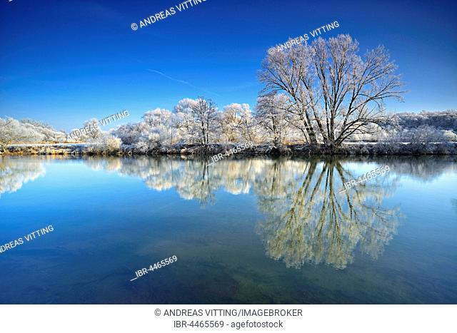 Trees with hoar frost, reflection in River Saale, in Weissenfels, Saxony-Anhalt, Germany