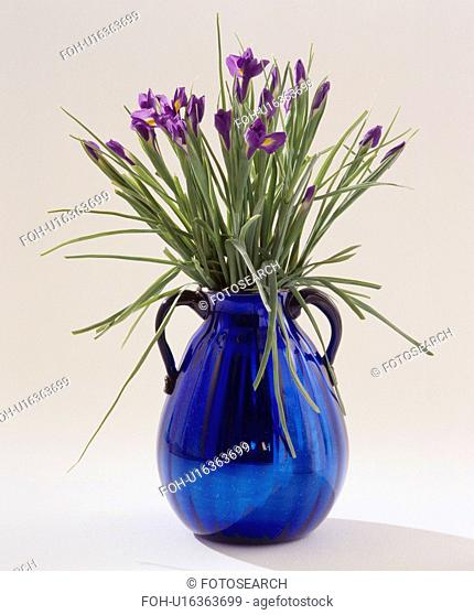 Still-Life of blue irises in blue metallic jug