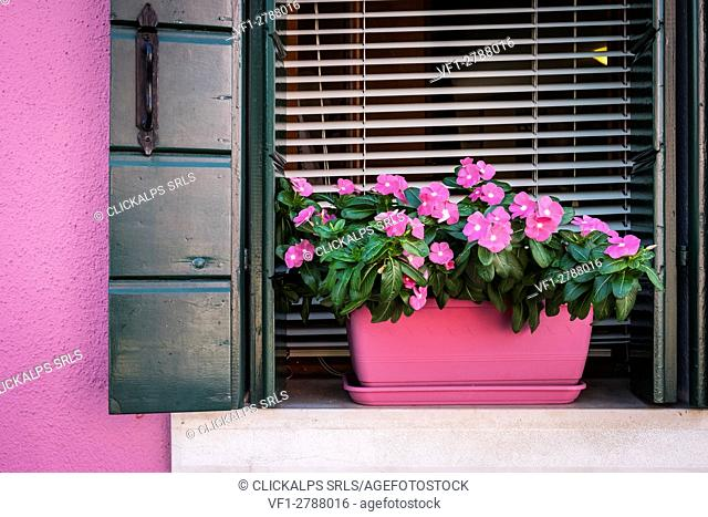 Burano, Venice, Veneto, North East Italy, Europe. Picturesque window with pink flowers