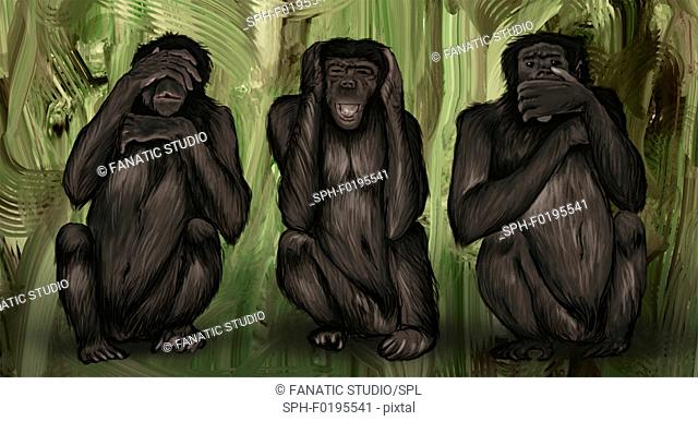 Illustration of three monkeys covering eyes, ears and mouth