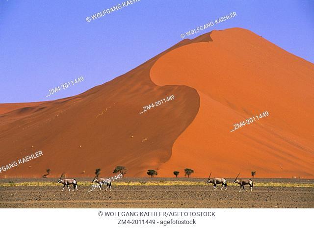 NAMIBIA, NAMIB-NAUKLUFT PARK, SOSSUSVLEI, SAND DUNE WITH ORYX