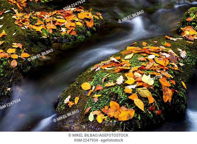 Forest and river in autumn. Ucieda. Ruente. Cabuerniga Valley. Cantabria, Spain, Europe