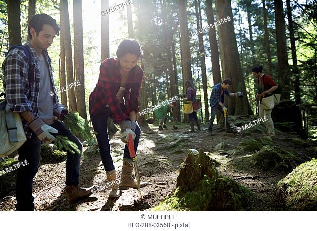 Volunteers planting trees in woods