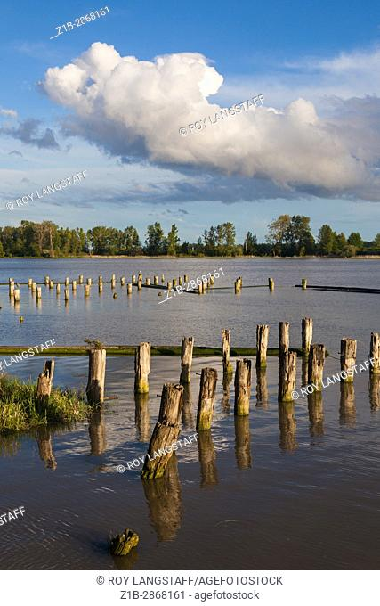 Wooden pilings of long gone fish caneries on the banks of the Fraser River in Vancouver