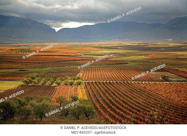 Vines in Leza valley, Rioja wine region, Spain, Europe