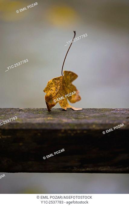 Autumn leaf closeup walking