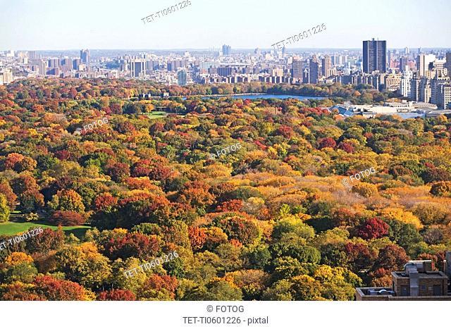 Autumn foliage, Central Park, New York City