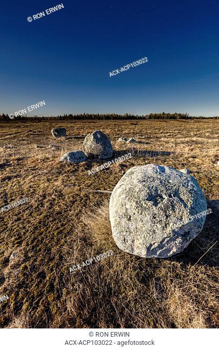 Erratic rocks on a Barrie Island Grasslands, Manitoulin Island, Ontario, Canada