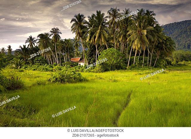 rice fields in Langkawi island. malaysia