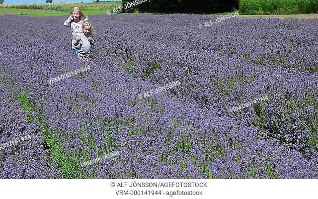 Children in lavender field