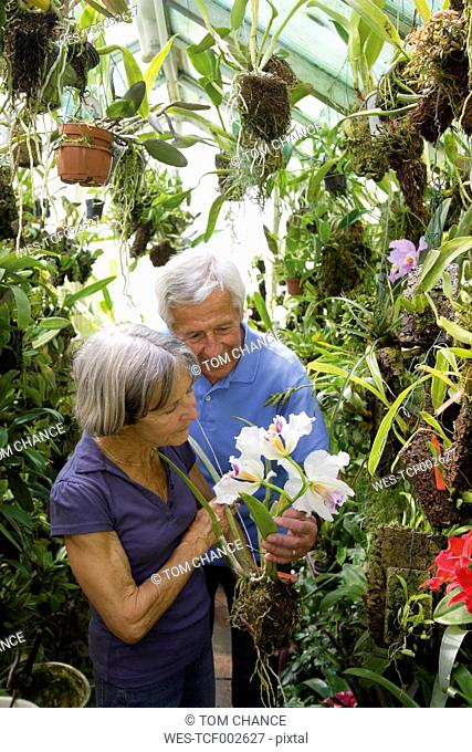 Germany, Bavaria, Senior couple gardening in glass house