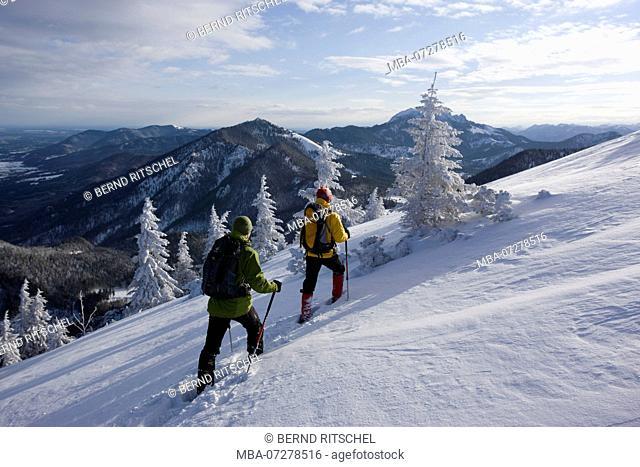 Snowshoe tour to the Jochberg, close Kochel, Bavarian Alps, Upper Bavaria, Bavaria, Germany
