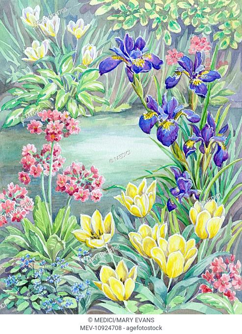Beside the Garden Pond – with deep pink primulas, irises, tulips and forget-me-nots