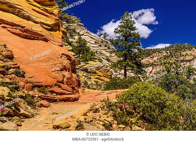 The USA, Utah, Washington county, Springdale, Zion National Park, Zion canyon, observation Point Trail